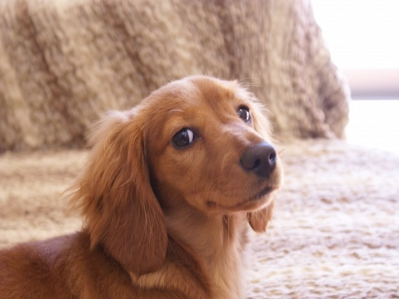 犬用ペットフード売場に関するアンケート
