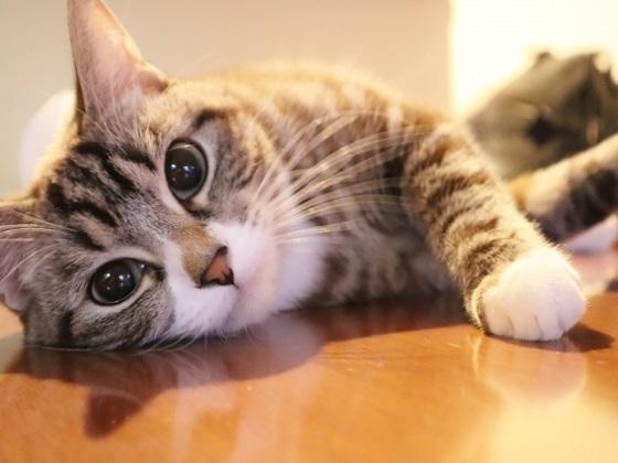 猫用ペットフード売場に関するアンケート